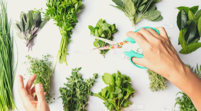 Las plantas que atraen energías positivas a tu hogar